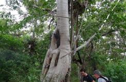BorneoKomodo-073