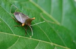 CostaRicaAtheris-108