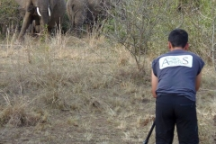 Ouganda_herping_092