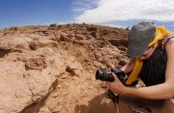 2015, Cerastes, Famille, Herpéto, Maroc, Maud, Photo, Reptiles, Serpents, Trips, Viperidae