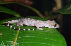 BorneoKomodo-252