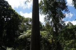 BorneoKomodo-317