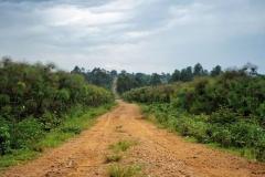 Ouganda_herping_053