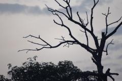 Ouganda_herping_078