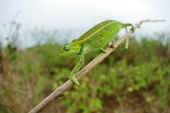 Ouganda_herping_114