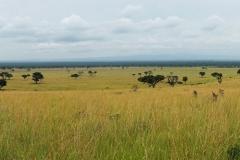 Ouganda_herping_123